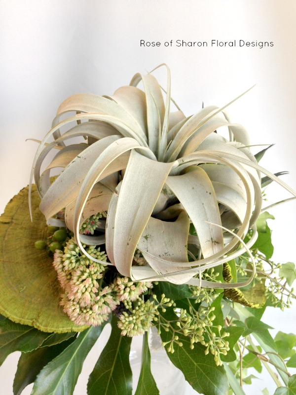 Closeup: Tillandsia Cascading Bouquet. Rose of Sharon Floral Designs