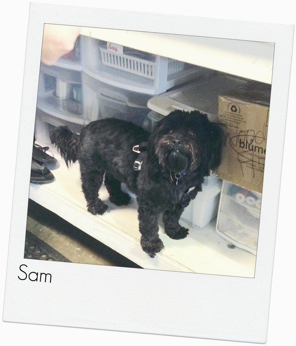 Sam: Shop puppy