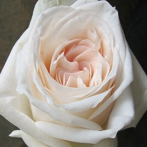 Garden Rose Rose Of Sharon Floral Designs