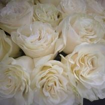 flower-white-rose-mondial.jpg