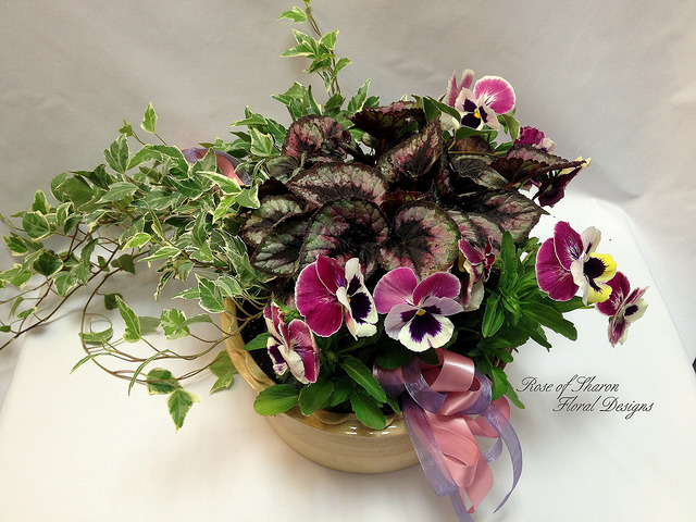 Pansy Mixed Garden Planter