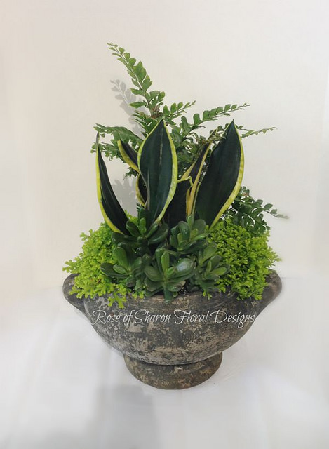 Small Green Mixed Garden Planter