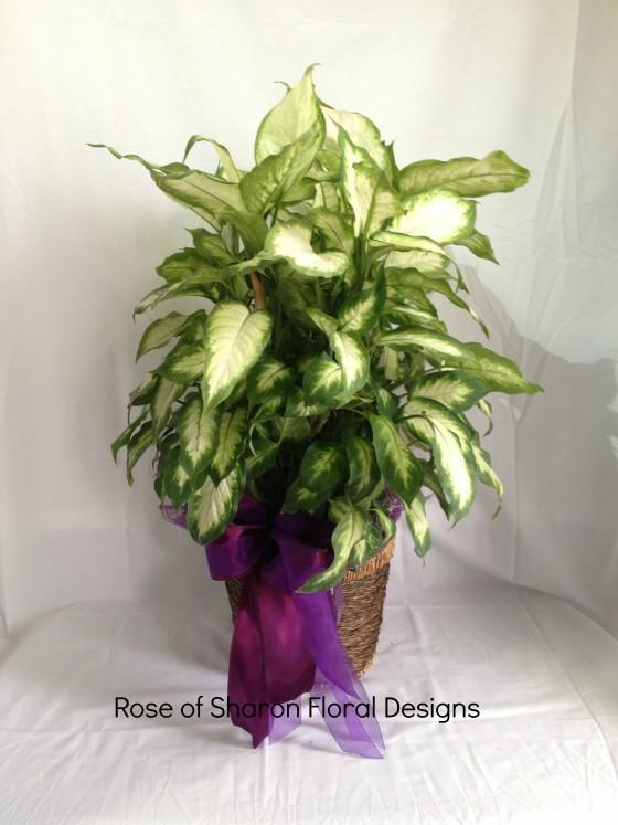 Plant-green 8_100.jpg