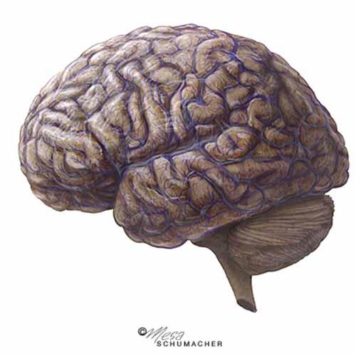 Brain Veins - Mesa Schumacher - Inside Illustration Podcast