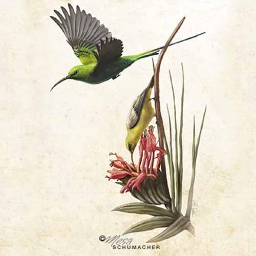 Malachite Sunbirds - Mesa Schumacher - Inside Illustration Podcast