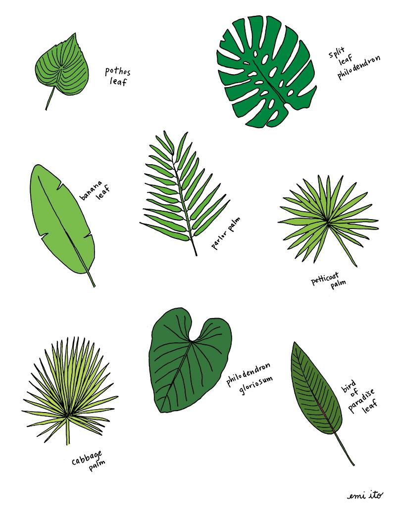 palm leaf types - emi ito illustration