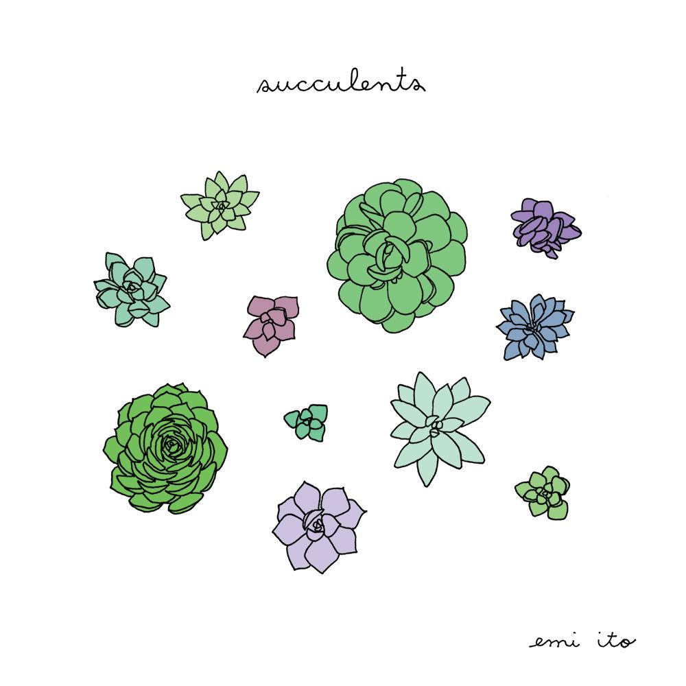 Succulents - emi ito illustration