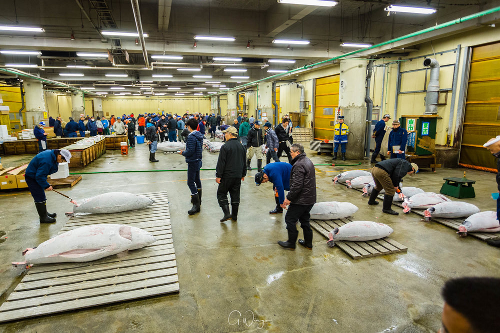 Tsukiji Tuna Auction