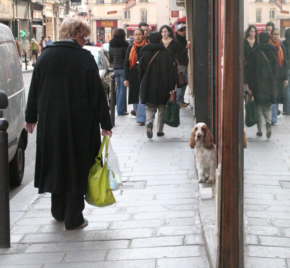 Dog on rue Dauphine.jpg