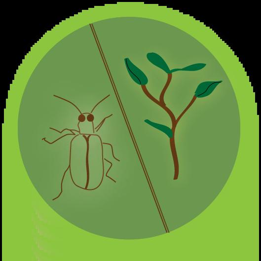 nutrizione delle piante e il controllo dei parassiti organico