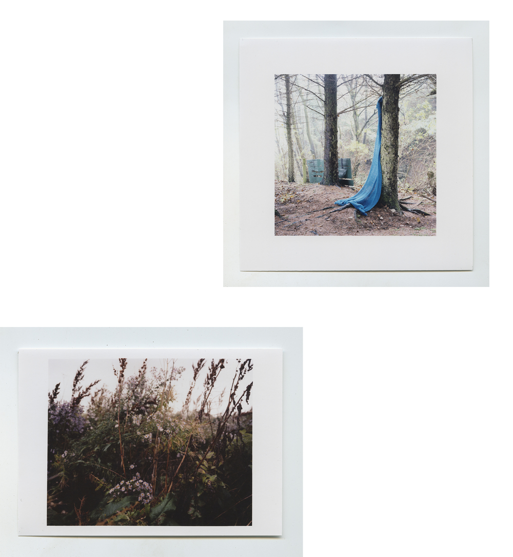 Prints from the series 'Seagulls'