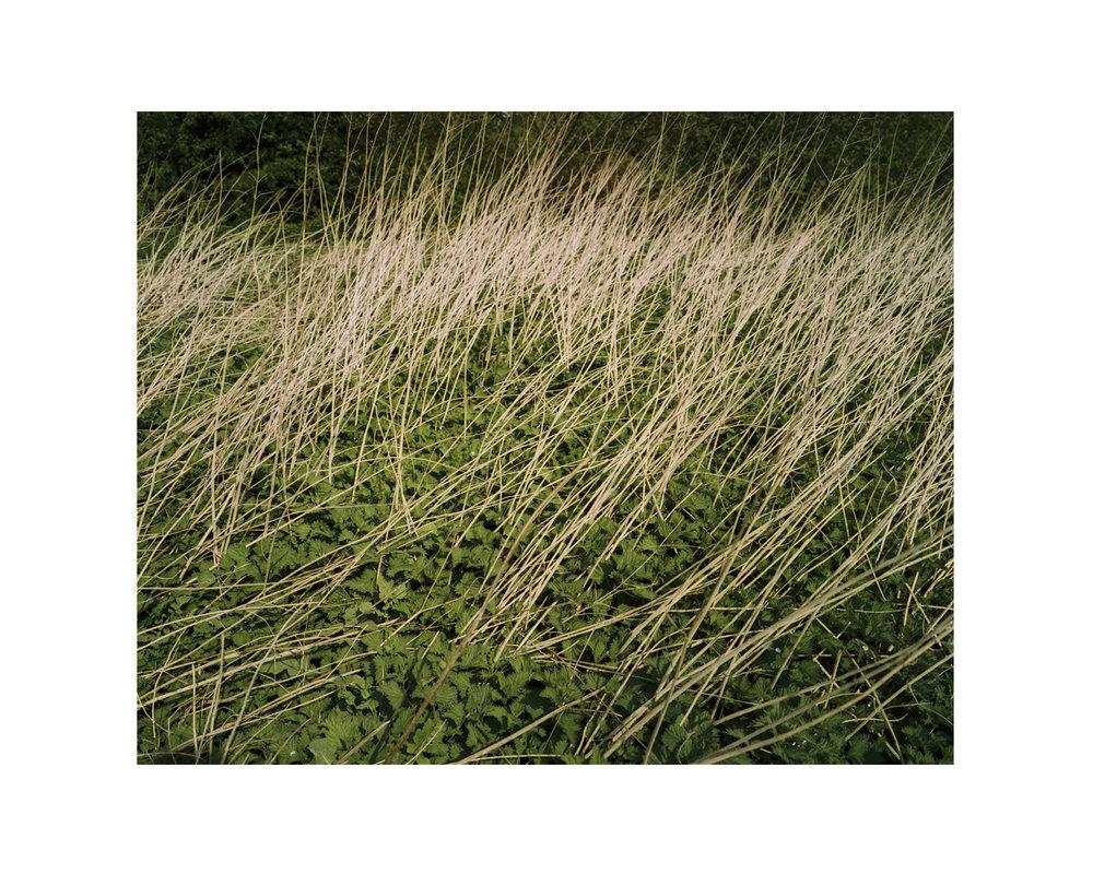 Marshes_57.jpg