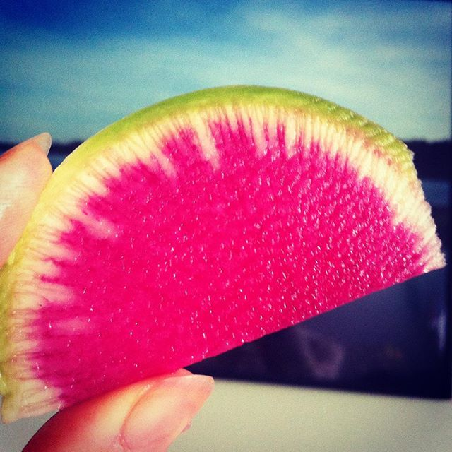 Happy life is in enjoying the little joys every day. I really appreciated this slice of a beautiful watermelon radish today. What little joy did you appreciate today? #happylife #littlejoy #happiness #smallmomemtsofjoy #inspiredliving #appreciationforlife