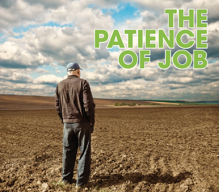 patience of job.jpg