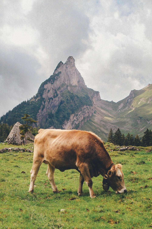Der Alpstein, Switzerland