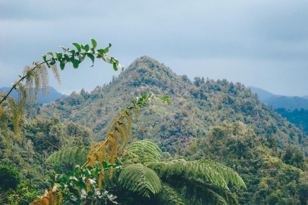 The Coromandel, New Zealand