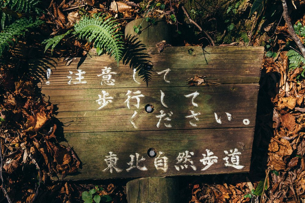 FUJI1905.jpg