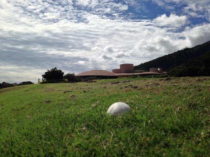 Nene goose egg, image via mauinow.com.