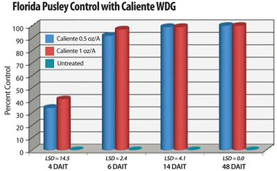 A single application of Caliente at 0.5 and 1.0 oz/A provided complete control of Florida Pusley (Brecke, UF, 2008). All treatments included a non-ionic surfactant at 0.25% v:v.