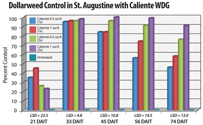 Two applications of Caliente at 1.0 oz/A provided >90% long-term control of Dollarweed in St. Augustinegrass (Brecke, UF, 2008). All treatments included a non-ionic surfactant at 0.25% v:v. Repeat applications (2x) of Caliente were made 30 days after the initial treatment.