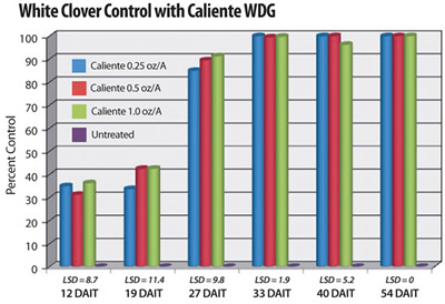 A single application of Caliente at 0.25 and 1.0 oz/A provided complete long-term control of White Clover (Yelverton, NCSU, 2008). All treatments included a non-ionic surfactant at 0.25% v:v.