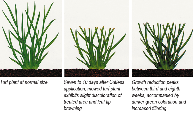 Cutless Turf Growth Regulator provides excellent control of targeted plants, reducing shoot growth and clipping yield, while improving aesthetics and playability.