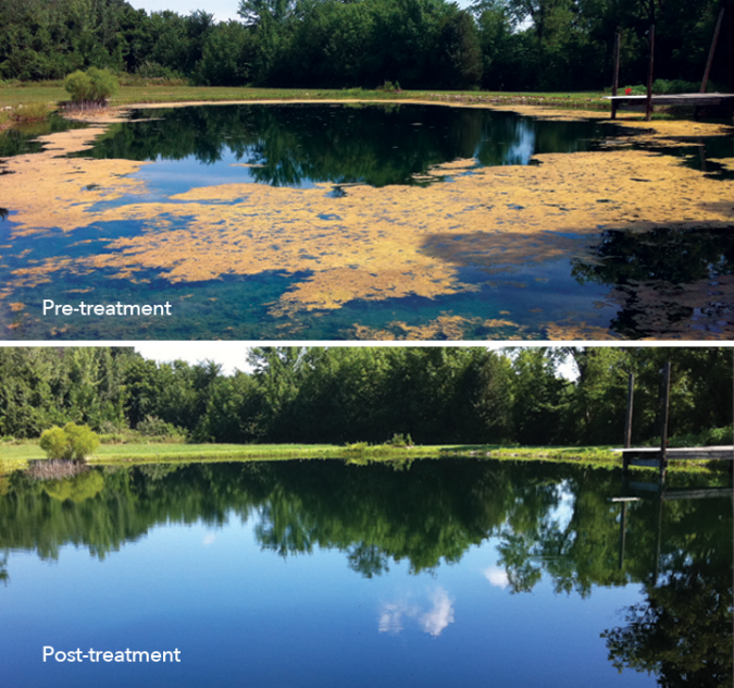 Pre-treatment and post-treatment images of a water-body treated with SeClear Algaecide and Water Quality Enhancer.