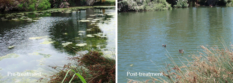 Pre-treatment and post-treatment images of a water body treated with Phoslock Phosphorus Locking Technology.