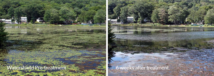 Watershield pre-treatment and post-treatment images of a Clearcast-treated water body.