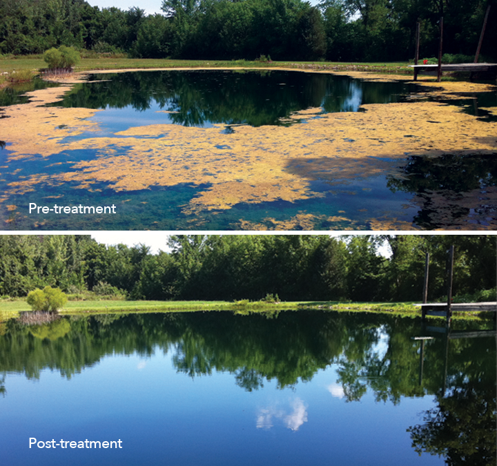 Pre-treatment and post-treatment images for a water body treated with SeClear Algaecide and Water Quality Enhancer.