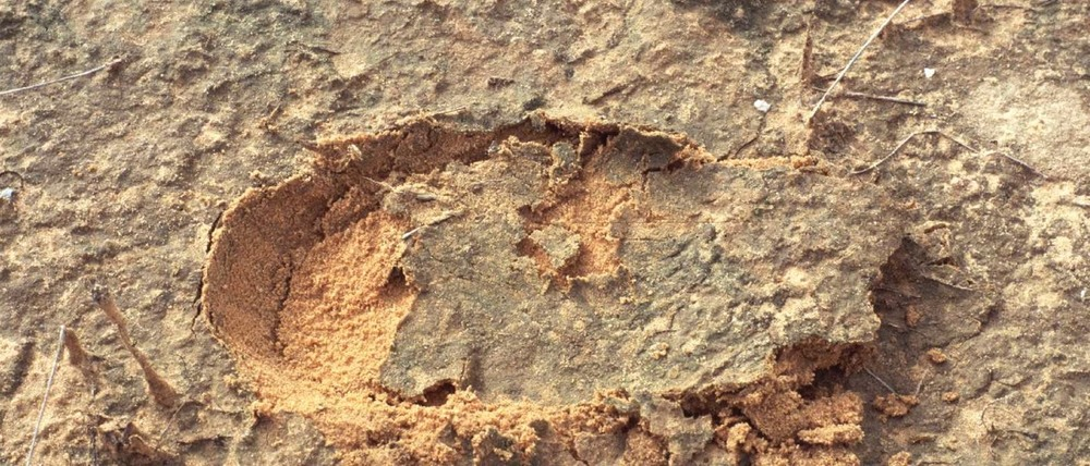A biocrust. Image credit: dryland-biodiversity.de