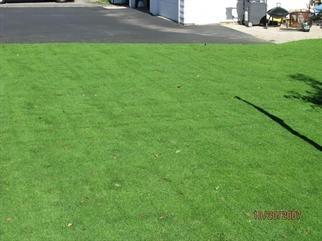 Creeping bentgrass in a residential lawn. Credit: westernwonder.com