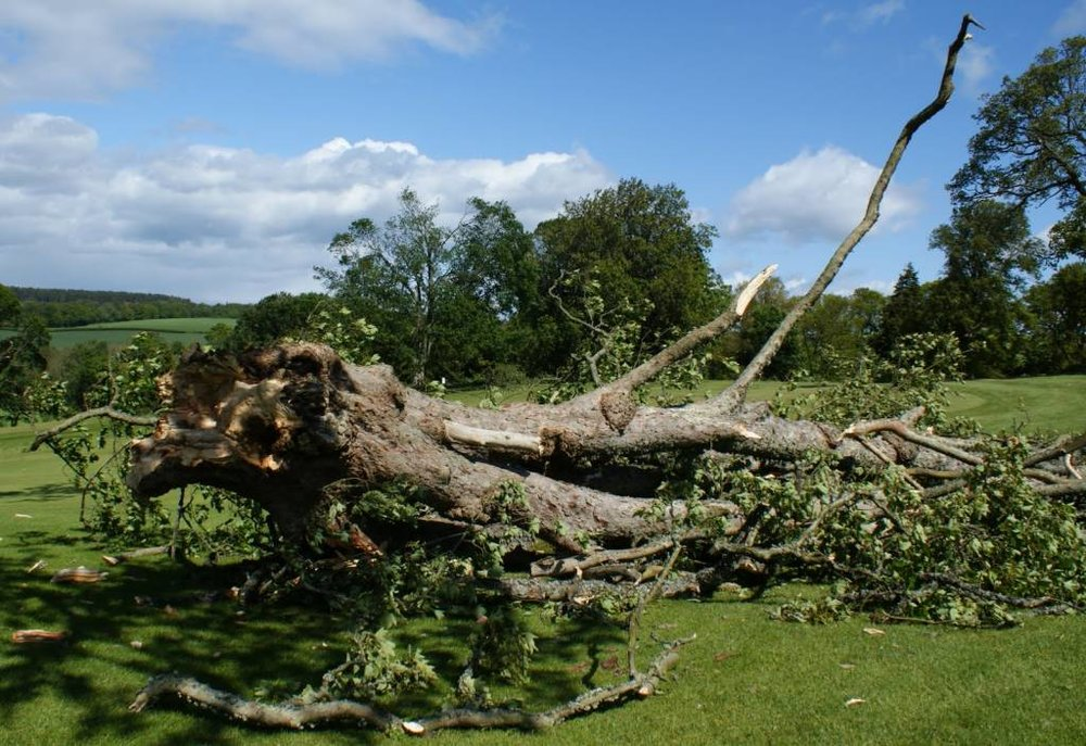 An image of a downed tree on a golf course. Image credit: Bunkers Paradise