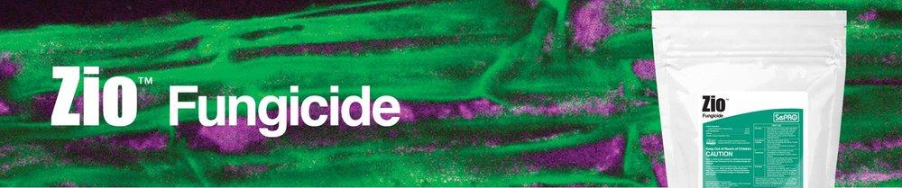 Zio-page-banner.jpg