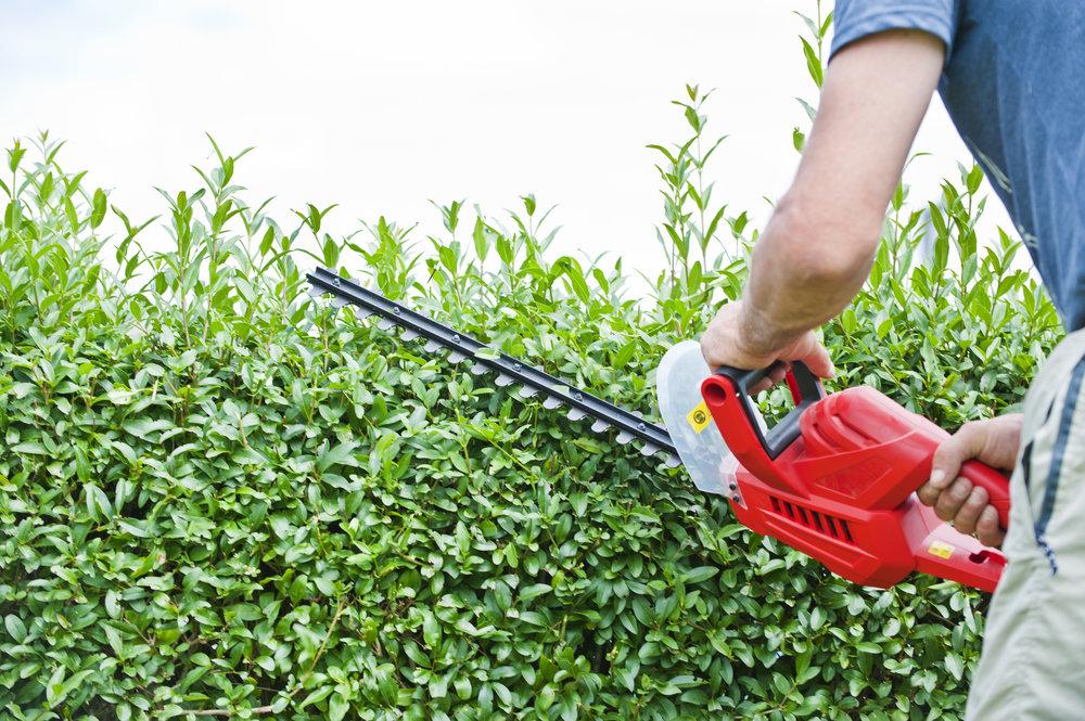boxwood-pruning.jpg