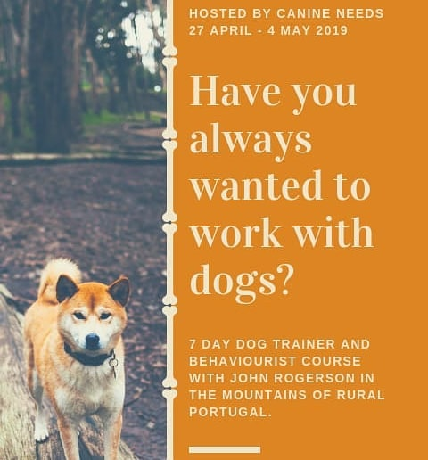 Get in touch for details of our next course! #johnrogerson #dogtrainers #dogjobs #Londondogs #dogprofessional #dogwalker #doglover #dogbehaviourist #internationaldogs #traindogs #teachdogs  #dogsdaily #ilovedogs #dogsdogsdogs #puppytraining #puppysocialization #puppydevelopment #puppytrainer