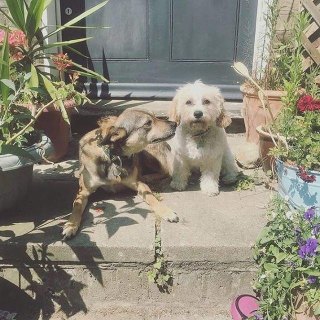 Beauts 😍 #sunnydogs #dogsoflondon #puppydogs #dogsofinsta #dogslife #doglove #valentines