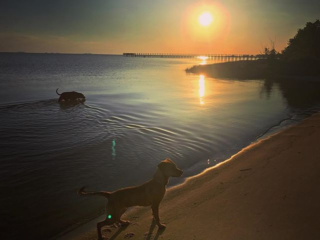 Sunset with my crew #obx #sunset #dogs #home #nagshead