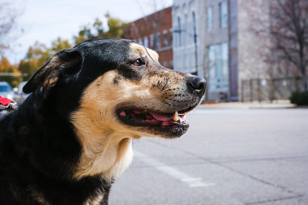 grantsdog-2.jpg