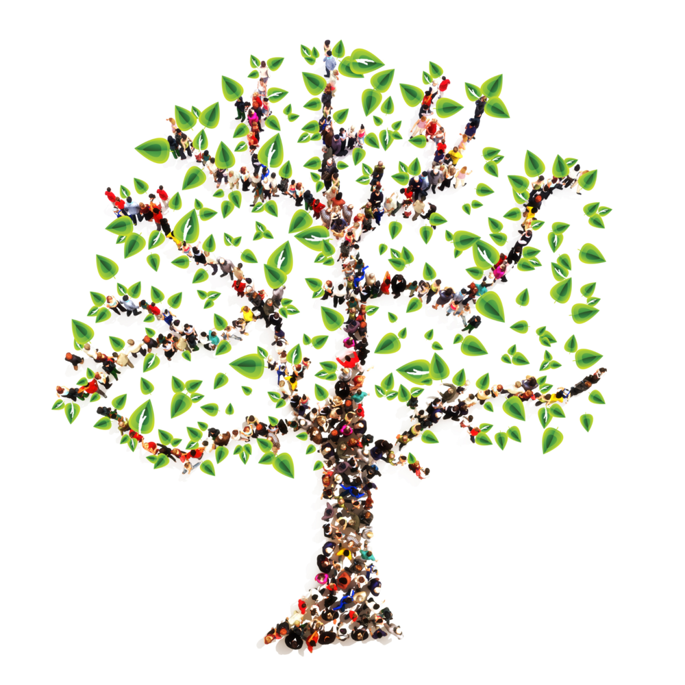 Celebrate Family History Month Insight Medical Genetics