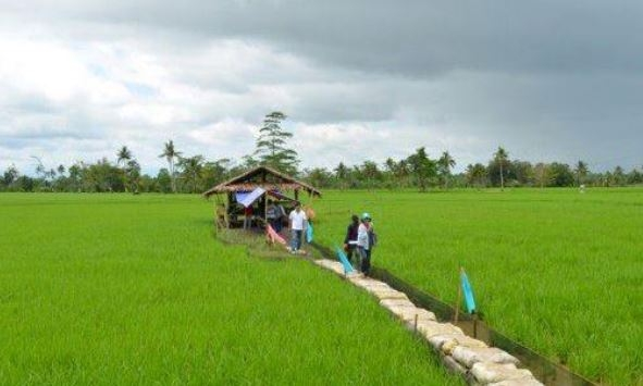 PROMOTE RICE IN BOHOL