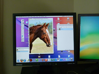 This shows how I use Photoshop and a monitor to edit and reference for my oil painting of Wickers the Warmblood.