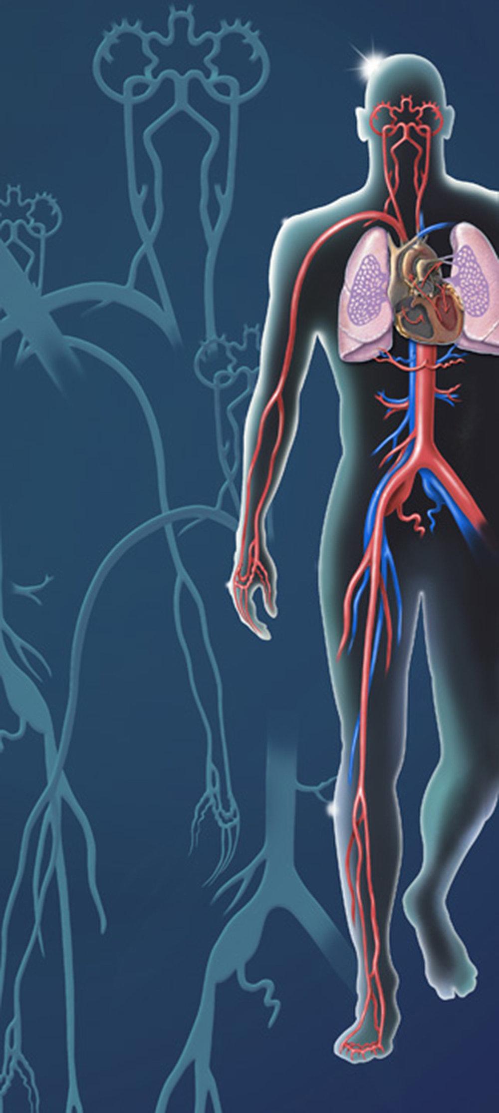 arterialsystem1500.jpg