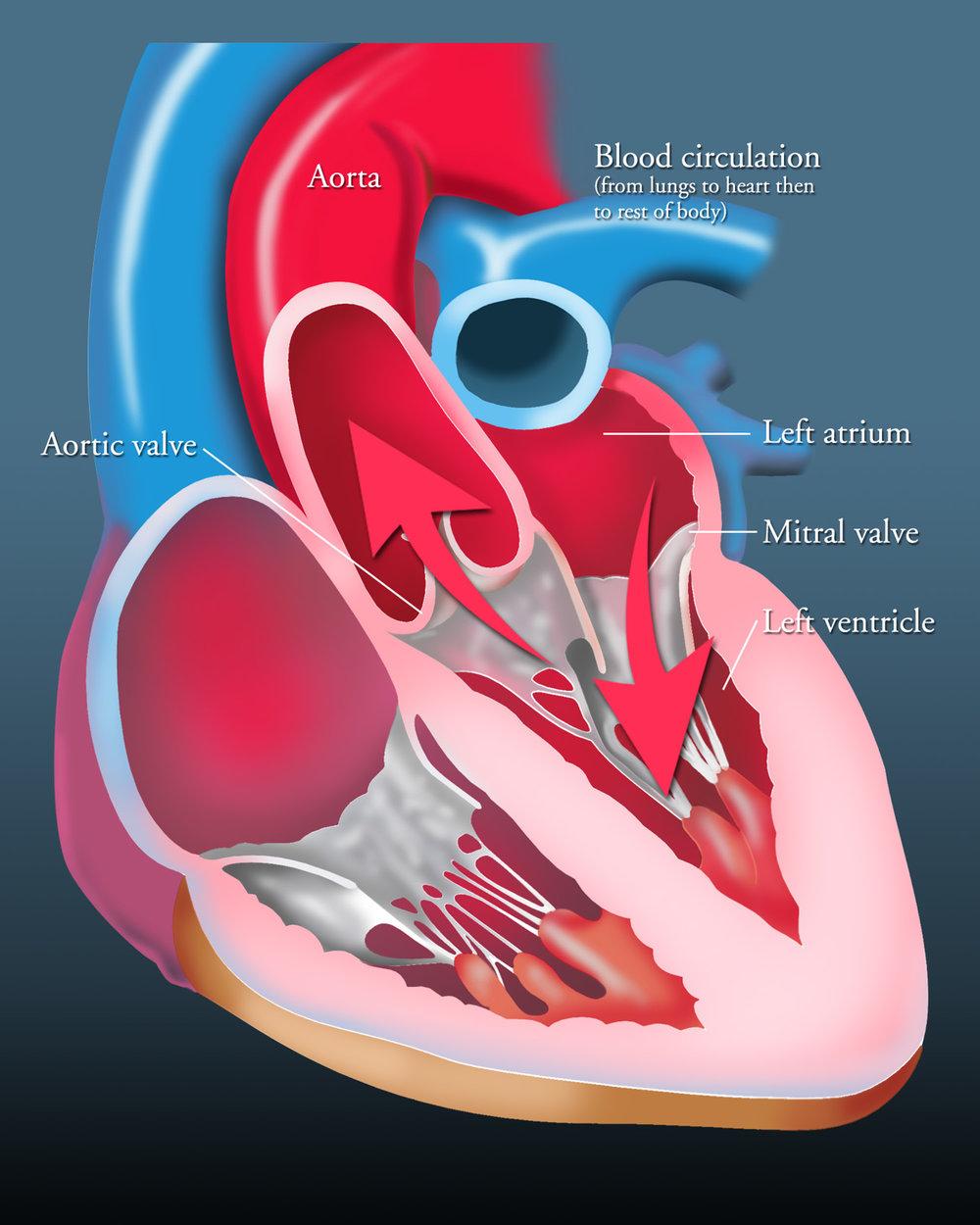 hearthrtcirc1500.jpg