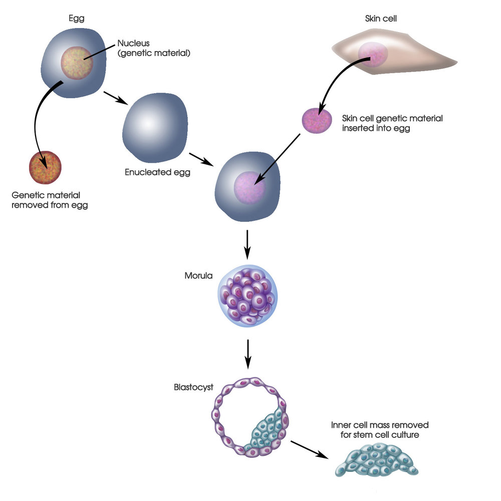 cellularstemcellcultivation21500.jpg