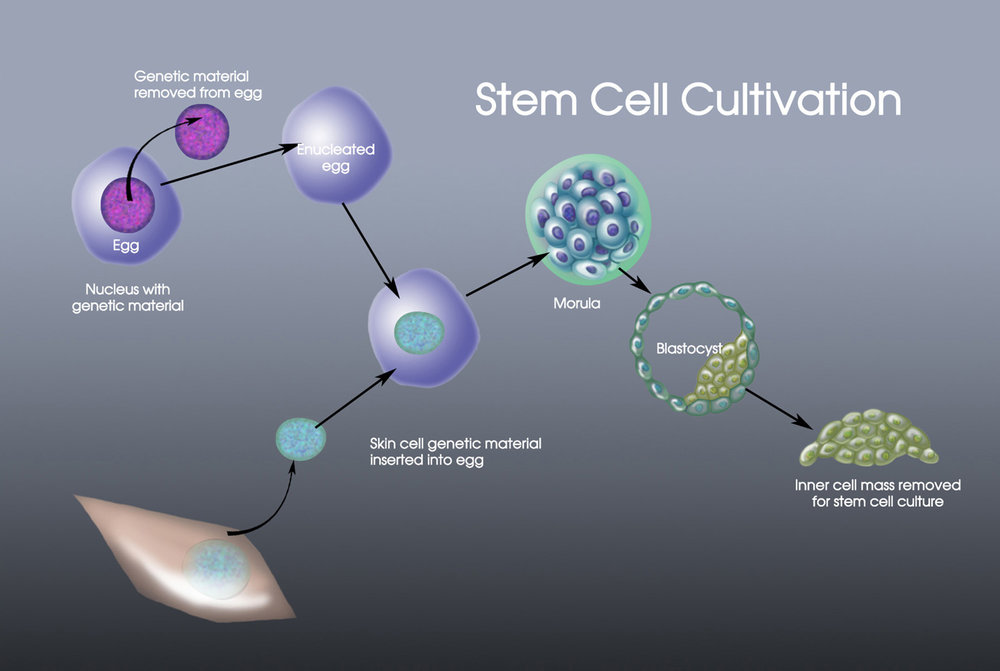 cellularstemcellscultivation1500.jpg