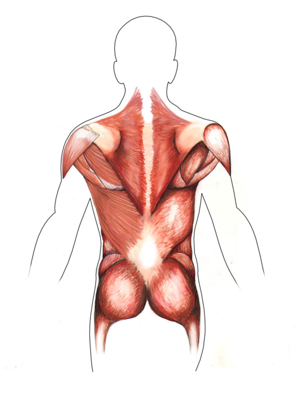 musclespost1500.jpg