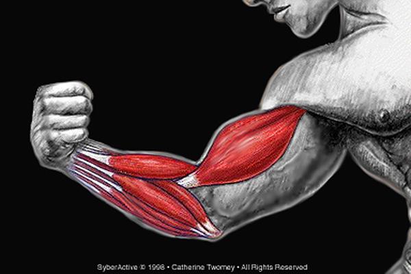 musculararm1500.jpg