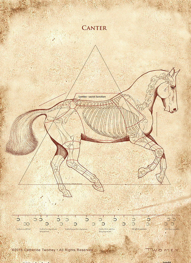 """DaVinci Canter Revealed"" print"