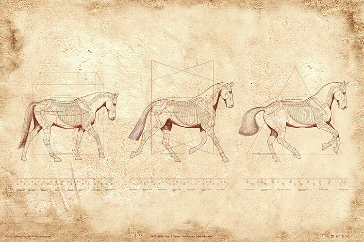 """WTC: DaVinci-esque Walk, Trot and Canter"" by C. Twomey"